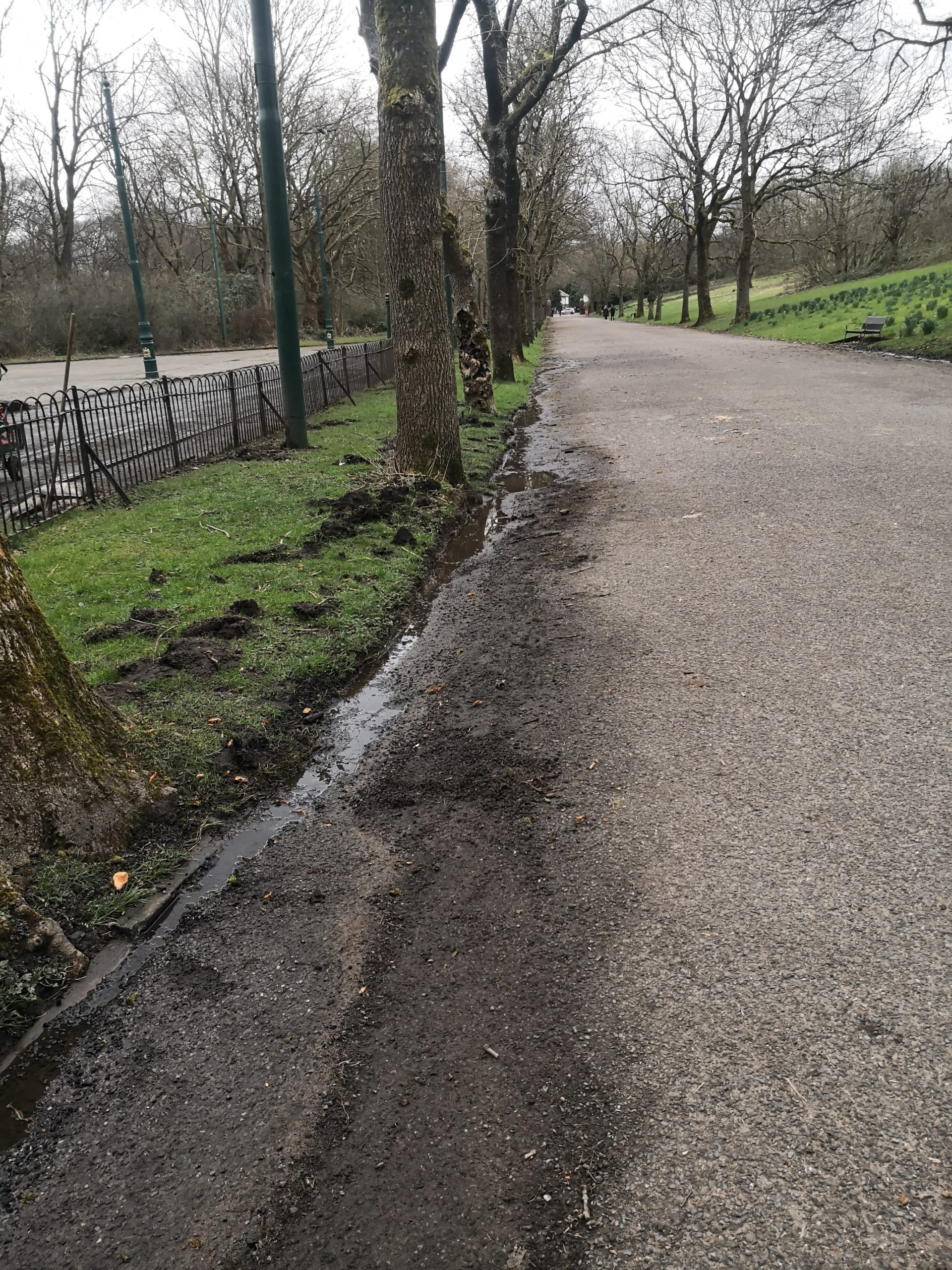 Cleaning up the Avenue side to allow better drainage of the hill
